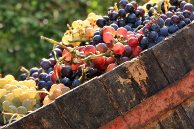 The great red wines of Campania