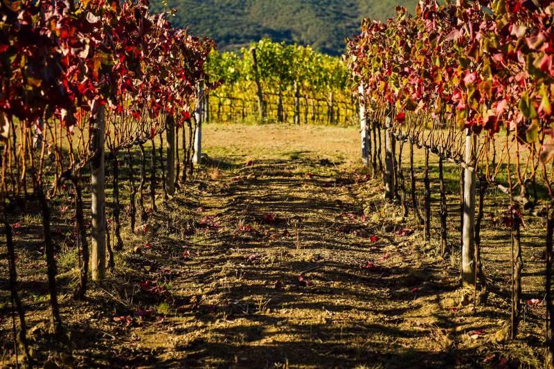 CHIANTI CLASSICO WINES & FLAVORS