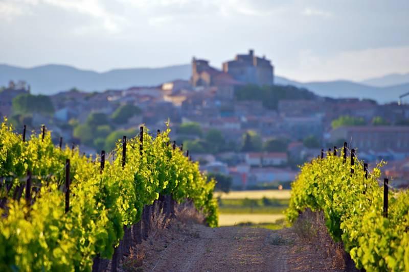 Chianti wine experience: wines, cellars & vineyards