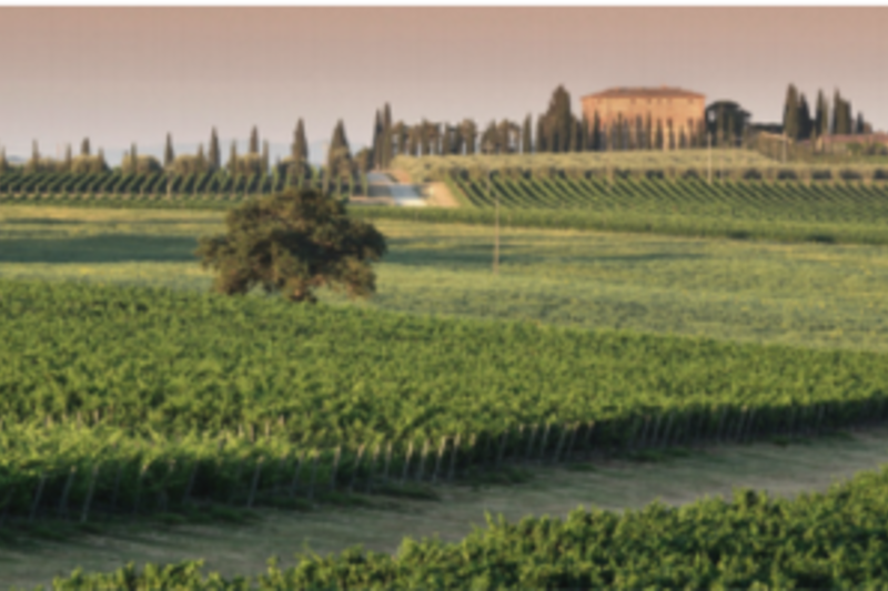 """ARPEGGIO"" WINE TASTING AND TOUR"