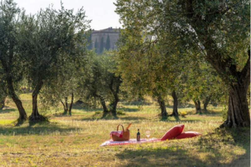 PICNIC UNDER THE OLIVE TREES