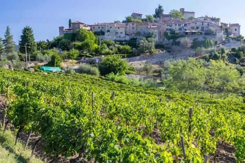 Premium Chianti wine experience: wines, cellars & vineyards