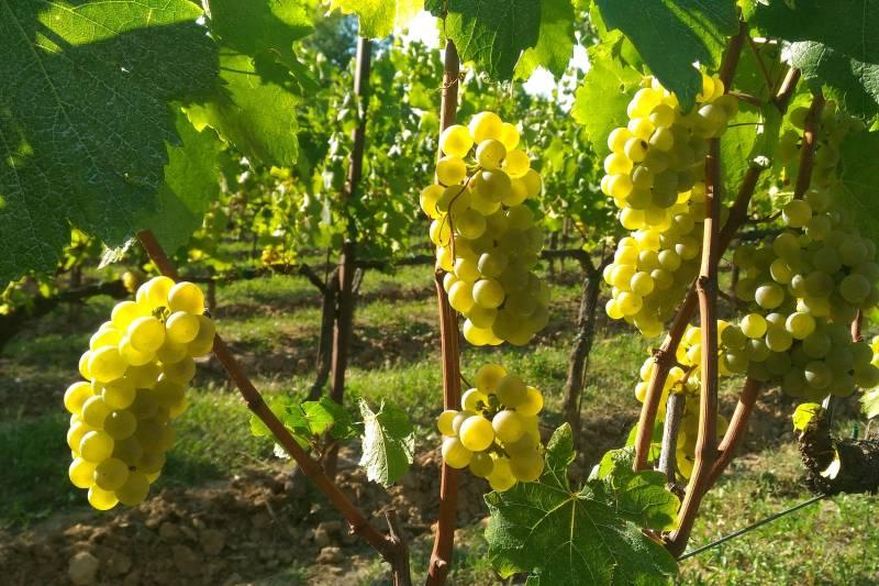 Wines of Franciacorta